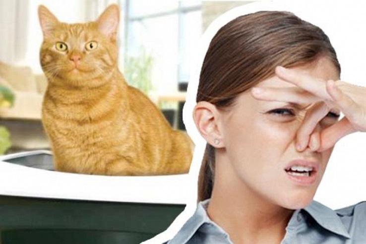 Запах мочи домашних животных в Калуге