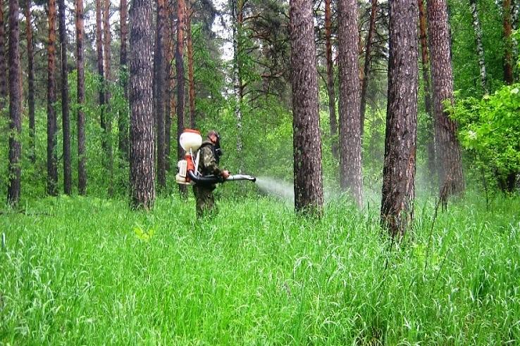 Обработка от клещей лесных массивов в Калуге